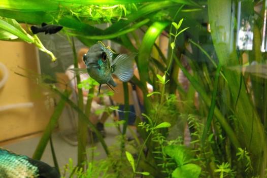 netzwerk natur, Übergabe des WasserWelten-Aquariums in Bad Dürkheim