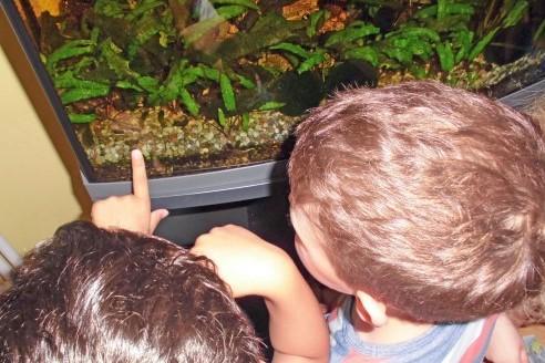 netzwerk natur, Übergabe des WasserWelten-Aquariums in Mainz