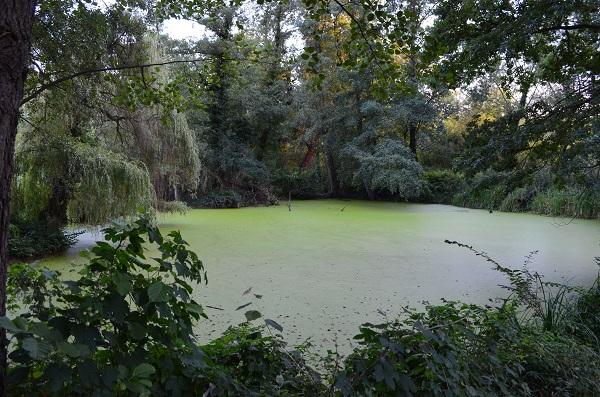 Artenvielfalt unserer Gewässer