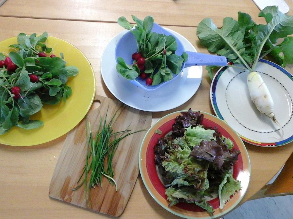 netzwerk natur, PflanzenWelten an der Grundschule in Otzing, Die erste Ernte