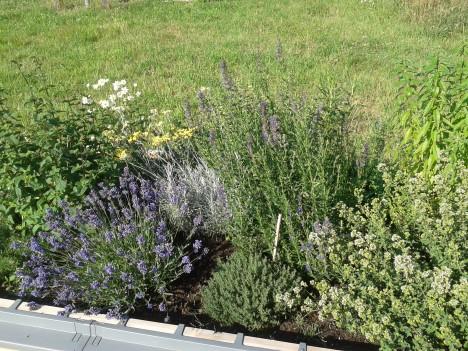 netzwerk natur- Übergabe des PflanzenWelten-Hochbeetes in Alsdorf (Foto: Mo Hilger)