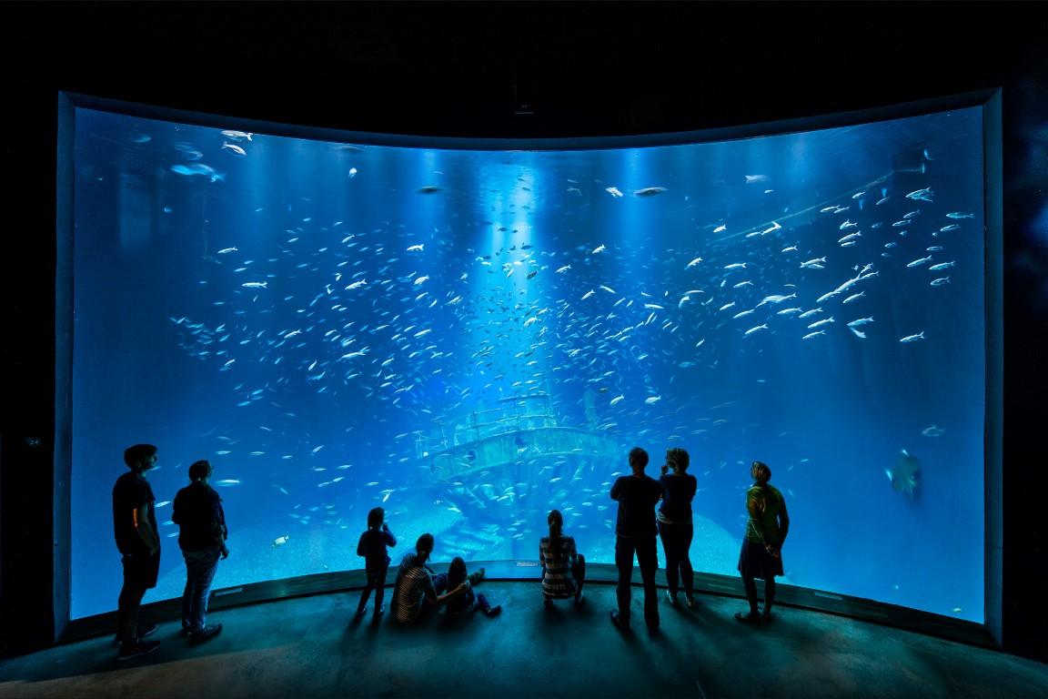 """Das Aquarium """"Offener Atlantik"""" ist mit 2,6 Mio Liter Wasser das größte Becken im OZEANEUM"""
