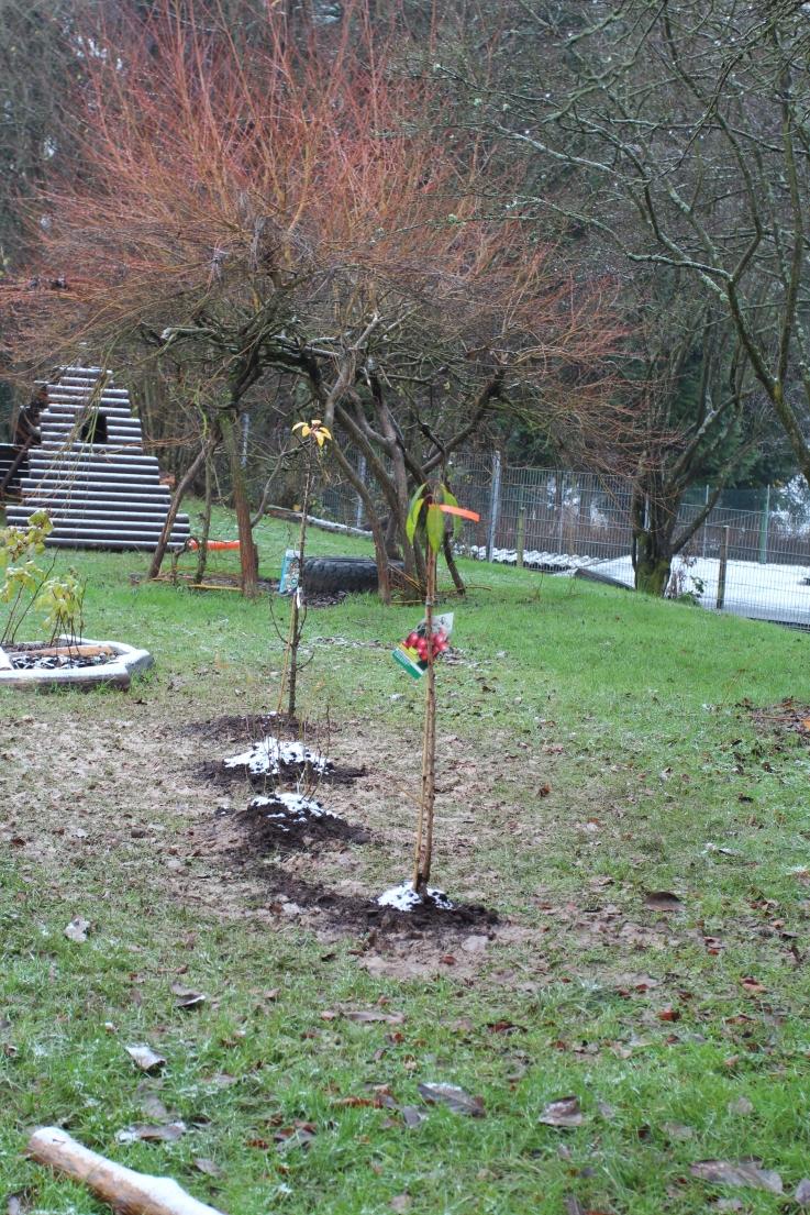 netzwerk natur, Wir pflanzen Zukunft! Einweihung des Naschgartens in der Kita Kükennest in Allendorf, Greifenstein