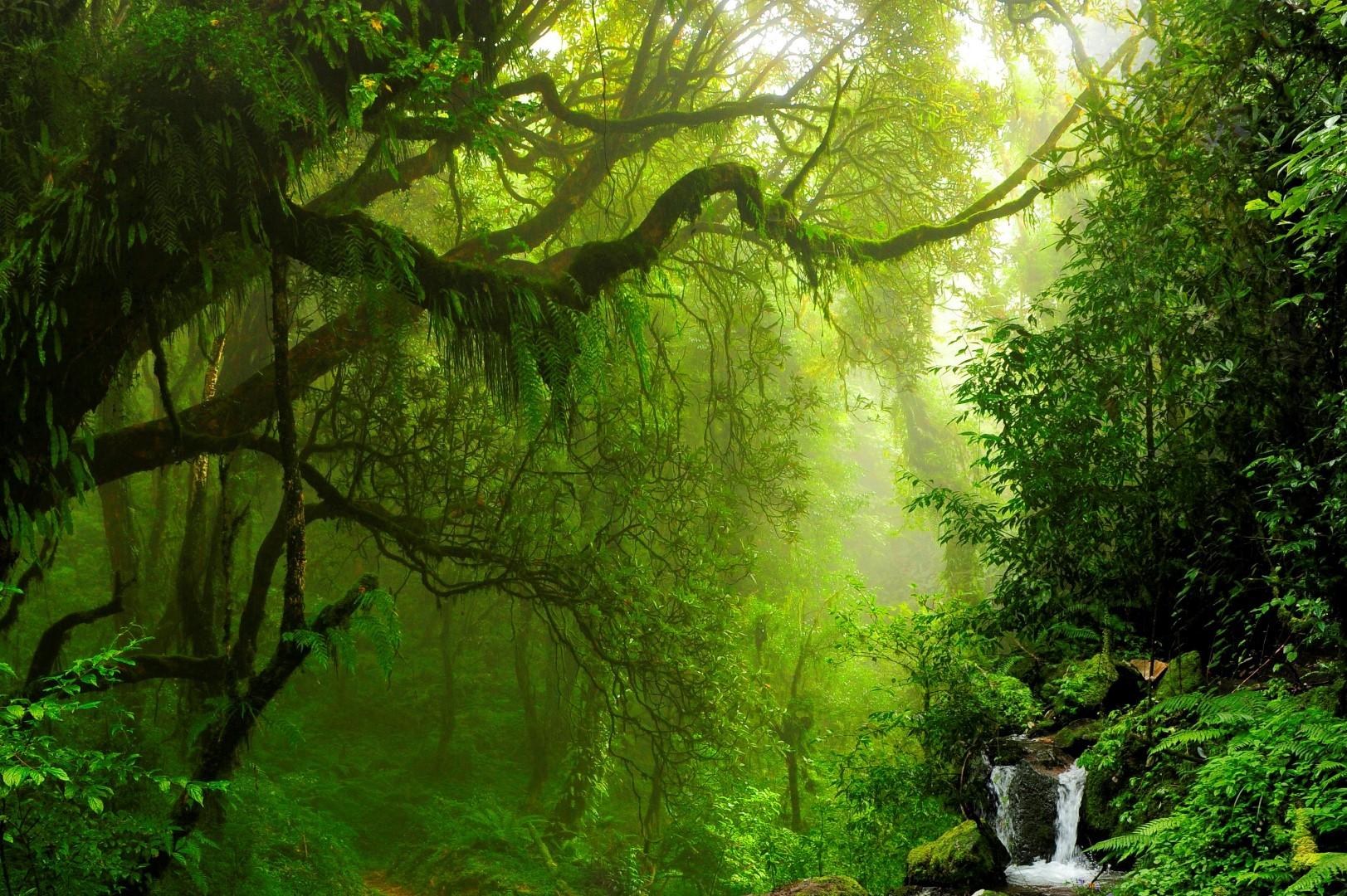 netzwerk natur, PflanzenWelten