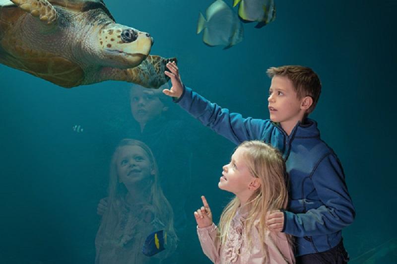 netzwerk natur, Ort der Umweltbildung, Deutsches Meeresmuseum Stralsund
