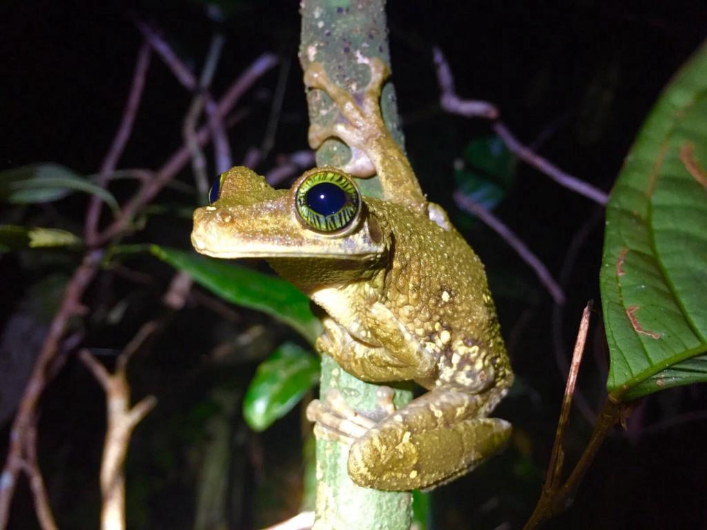 netzwerk natur, Biologische Vielfalt, Ecuador, Frosch