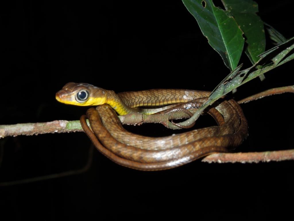 netzwerk natur, Biologische Vielfalt, Ecuador, Schlange