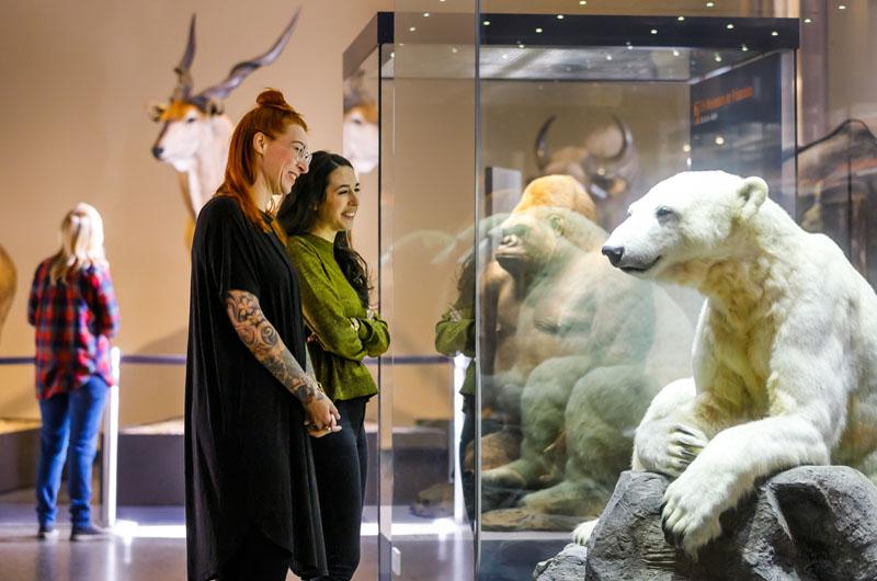 netzwerk natur, Orte der Umweltbildung, Museum für Naturkunde Berlin, Eisbär Knut