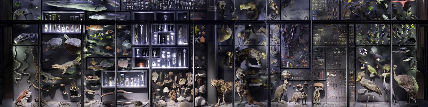 netzwerk natur, Orte der Umweltbildung, Museum für Naturkunde Berlin, Biowand