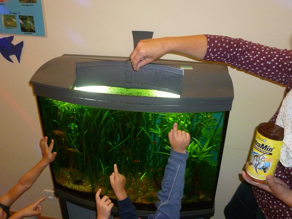 netzwerk natur, Übergabe des WasserWelten Aquariums in Vöhringen