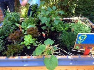 netzwerk natur, Übergabe des PflanzenWelten-Hochbeetes an die Gemeinschaftsgrundschule Breyell