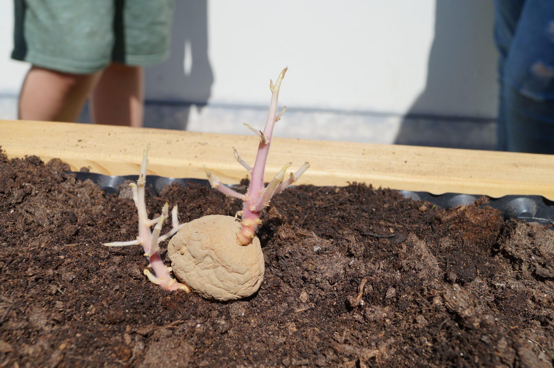 netzwerk natur, Übergabe des Naschgartens and die Grundschule Evesen