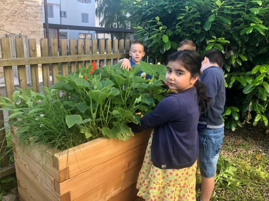 netzwerk natur, das PflanzenWelten-Hochbeet für die Barbara-Gonzaga-Schule (Foto: Schule)