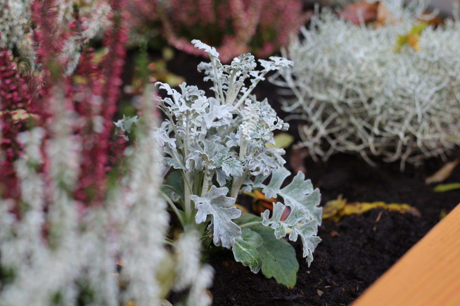 Das PflanzenWelten-Hochbeet in Velbert, Foto André Tessadri