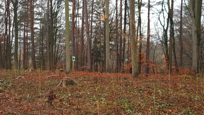Kaum zu sehen neben den großen Bäumen - aber das ändert sich bald! (Foto Lachner)
